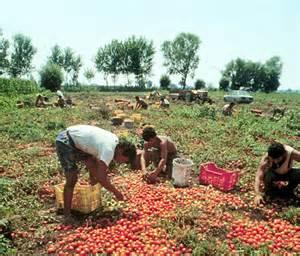 La schivitù, dalla raccolta del cotone negli USA a quella dei pomodori in Italy