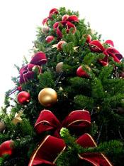 Albero di Natale - fonte wikipedia