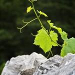 Vignaioli di montagna: Trentino e Alto Adige in degustazione a Palazzo Roccabruna