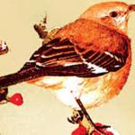 MIRNA MORETTI: I grandi autori se ne vanno – Harper Lee , Umberto Eco