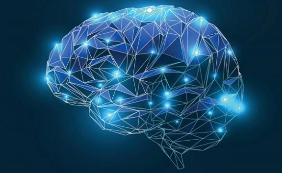 600 neuroscienze