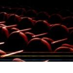 QUE VIVA FRIDA<br/> Teatro San Marco