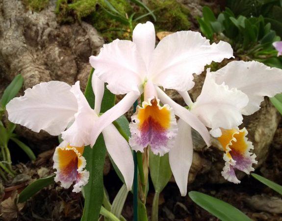 Orchidee tropicali: al Muse l'esposizione internazionale