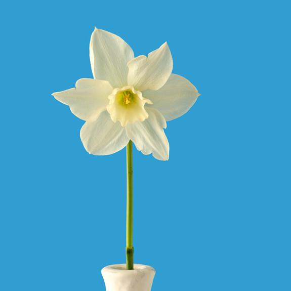 Francesca Gregori servizi fotografici Trento Immagine dalla collezione Feeling Flowery